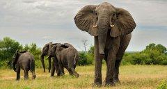 elephant23.jpg